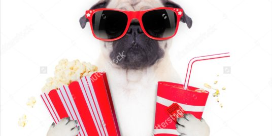 stock-photo-cinema-movie-tv-watching-pug-dog-isolated-on-white-background-with-popcorn-and-soda-wearing-d-215186836